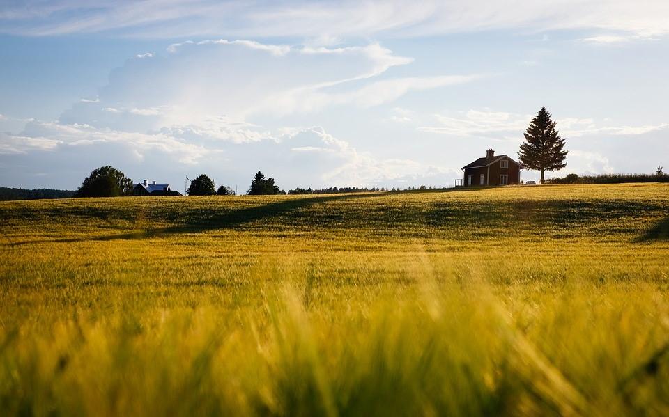 Conheça três benefícios de ter uma casa no campo